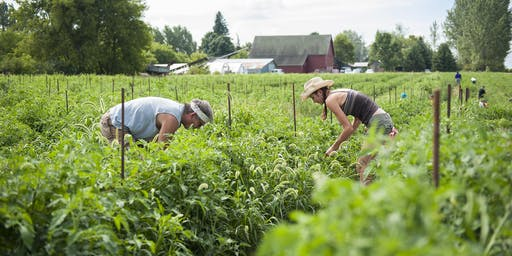 CROP MOB at Riverbend Farm - September 7, 2019