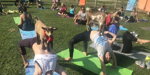 Goat Yoga Nashville- Jammin June