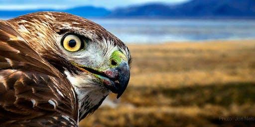 VERACRUZ - Coastal Raptor Migration and Inland Coatepec Adventures