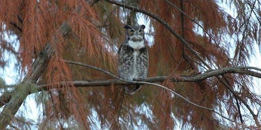 Pints 'n' Plants: Forest Park Owls: Hiding in Plain Sight