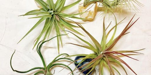 Girls Pint Out :: Crystals + Air Plant Ornament Workshop