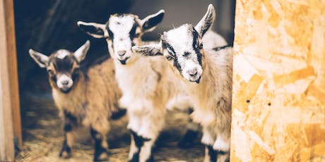 June 29 11 am Goat Yoga with The Yoga Experience tickets