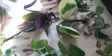 Plant cutting swap | June 23 tickets