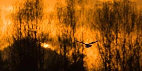 Avondwandeling met de boswachter: Op zoek naar de nachtzwaluw in het Prinsenbosch tickets