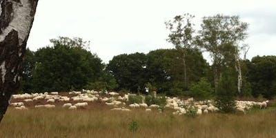 Wandeling single-evenementen Leusden-Woudenberg (Hemelvaartsdag)