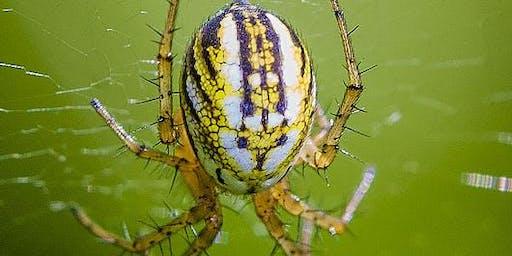 Spider Field Skills