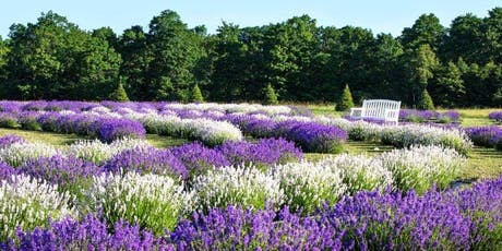 Lavender Tour & Picnic tickets