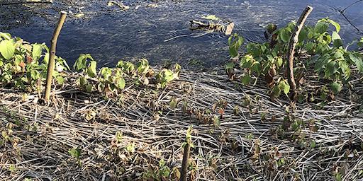 Millbrook Marsh Restoration