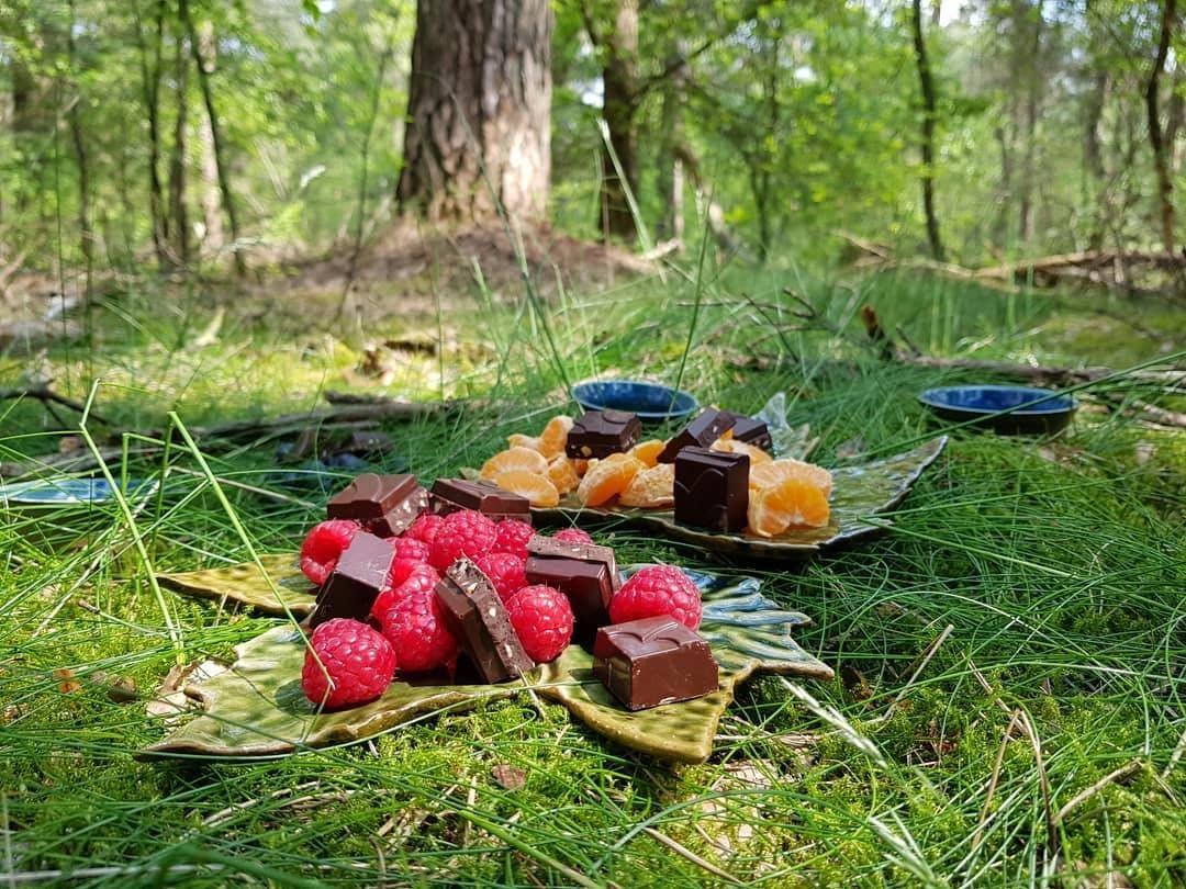 Forest Bathing (Shinrin-yoku) Walk in Zeist