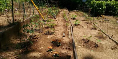 Creation Care Initiative: Community Garden Meet Up