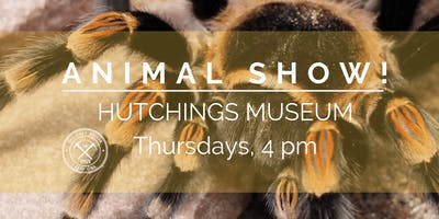 Live Animal Show | Thursday 4pm
