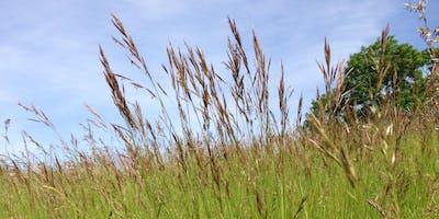 Grasses and Sedges - Grasslands and Meadows (extra date)