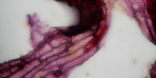 Botanical Microscopy Photography with Darya Warner