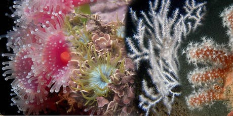 Short Course: Introduction to British Anemones and Corals tickets