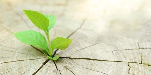 Transforming Adversity - Ridgewood