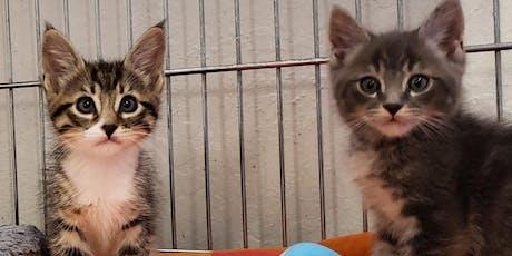 Hopalong Mill Valley Kitten Care Training! tickets