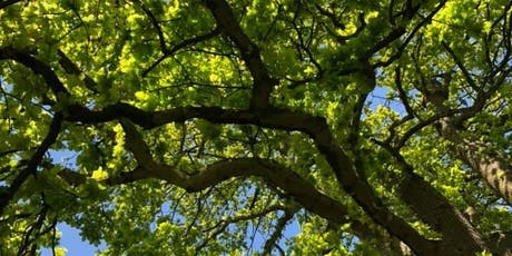 Woodland Wellbeing - Nature Immersion Day tickets