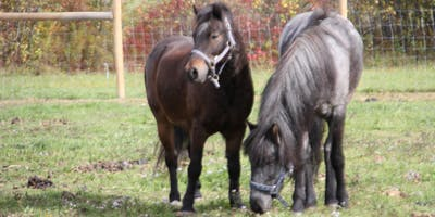 Pony Fun 101