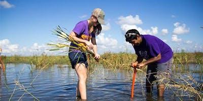 Bayou Bonfouca Marsh Restoration Planting Event on October 17, 2019