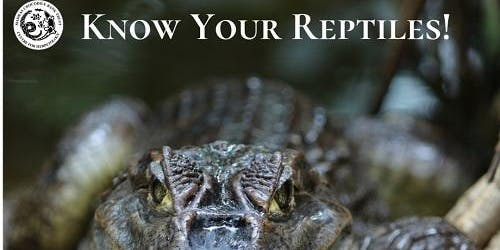 Know Your Reptiles!!!