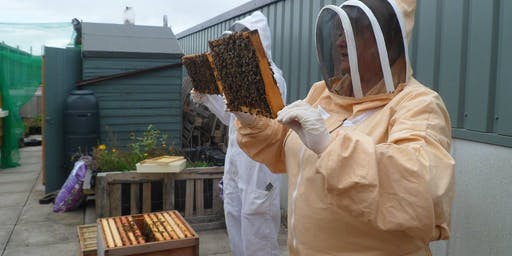 Bee Hive Inspections Friday 21 June