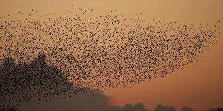 Walks with Wardens - Sunrise with Starlings at RSPB Ham Wall tickets