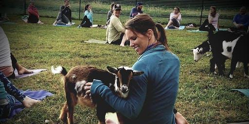 Goat Yoga at Salt Creek Valley Farms