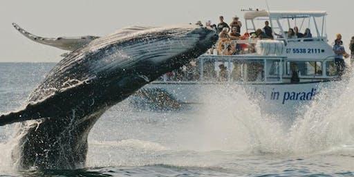 Excursion #6 : Observation des baleines - Rivère du loup