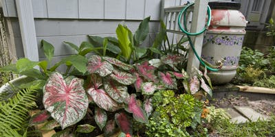Saving Money in Your Florida-Friendly Landscape