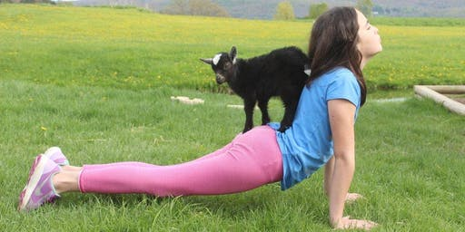 Goat Yoga at Woofstock 2019 1pm