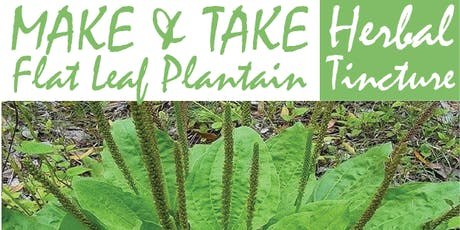 Make & Take Herbal Tincture: The Flat Leaf Plantain tickets