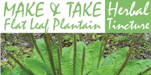 Make & Take Herbal Tincture: The Flat Leaf Plantain