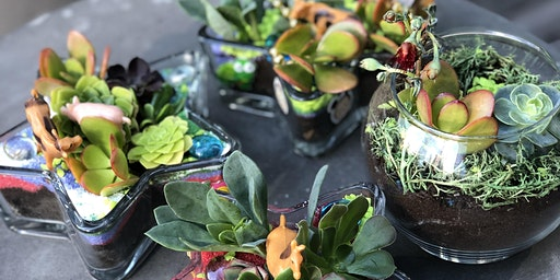 Succulent Terrarium (for kids and adults!)