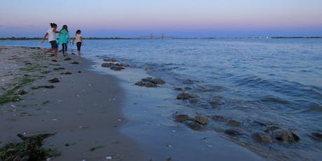 Horseshoe Crabs: Plumb Beach, Brooklyn: NYC Wild! Full Moon Photography & Nature Walk tickets