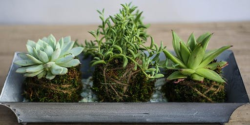 Kokedama Succulent Trio Workshop with Kathleen Nestell