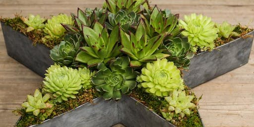 Succulent Star Arrangement Workshop with Onita Castillo