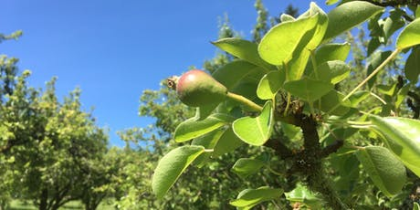 Summer Pruning Workshop at Healthy Homeland tickets