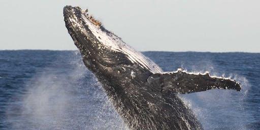 Whale Watch Talks - Captain Cook Lookout