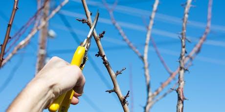 Fruit Tree Pruning Workshop tickets