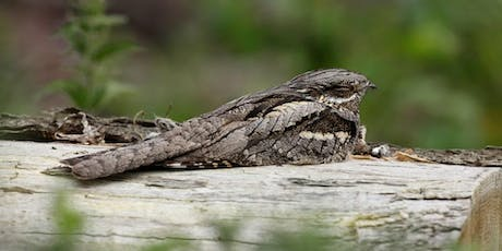 East Devon Heath Week's:  Bats, moths and nightjars tickets