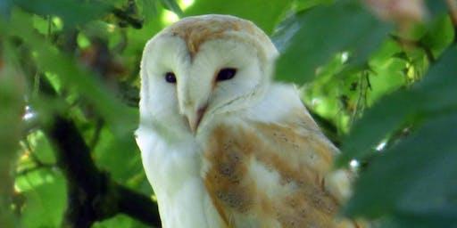 July 6th - Woodland Wildlife Safari