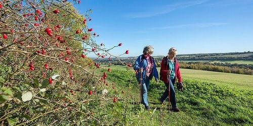 Cobham Landscape Walk