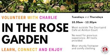 In the Rose Garden at Ashton Court