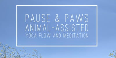Pause & Paws: Animal-Assisted Yoga and Meditation