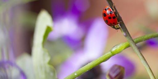 The Swiss Garden's Summer Bug Hunt