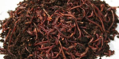 Vermicomposting - Composting with Worms!