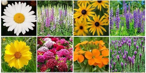 How to arrange your own summer flowers!