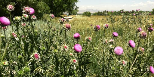 Land Stewardship Series - Noxious Weed Clinic-Open House