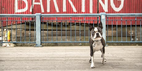 Boston Photography Workshops: Pet Photography with Fred Levy tickets