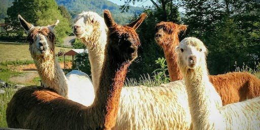 Sunday, July 21st, 2019 Alpaca Farm Visit